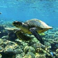 Nachhaltigkeitsprojekte auf den Malediven mit der Coco Collection