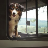 Schöne Campingplätze für Hunde