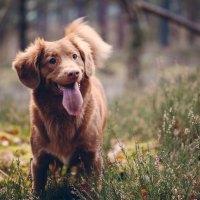 Tipps für den Urlaub mit Hund im Bayerischen Wald
