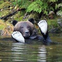 Kanada ist Top-Destination für Tierbegegnungen