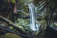 Tasmanischer Zauberwald