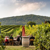 Von den Marillenfesten in der Wachau bis hin zur kreativen Kulinarik im Mostviertel