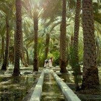 Abu Dhabi auch etwas für Naturliebhaber?