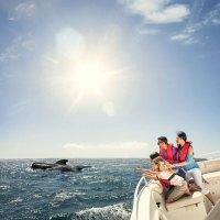 Whale Watching vor La Gomera