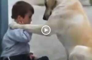 Uma criança e um cão