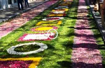 Lindos Tapetes de Flores - Vila do Conde
