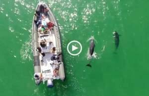 Tróia, voando com os Golfinhos
