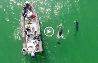 Tróia - Voando com os Golfinhos