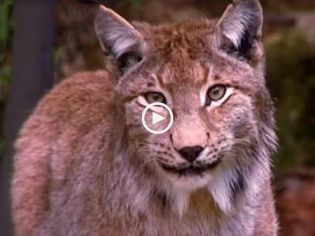 67% da vida selvagem pode desaparecer até 2020!