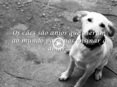 Os cães são os nossos anjos!