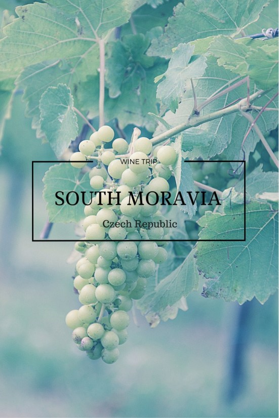 Apart from nice bike trails, castles, and natural wonders, some good wine is produced in the South Moravia, so the region became an attractive destination.