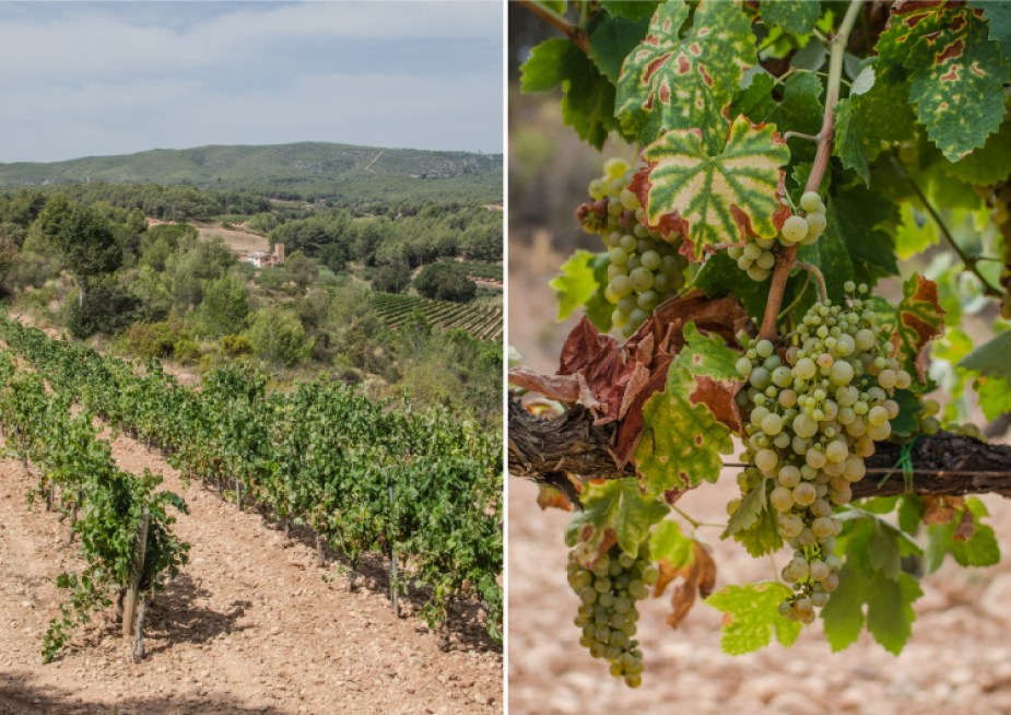 penedes_diptych-20