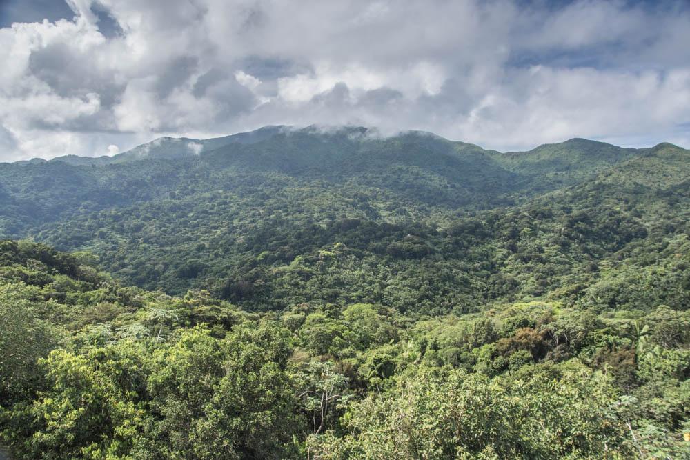 deštný prales El Yunque, Puerto Rico