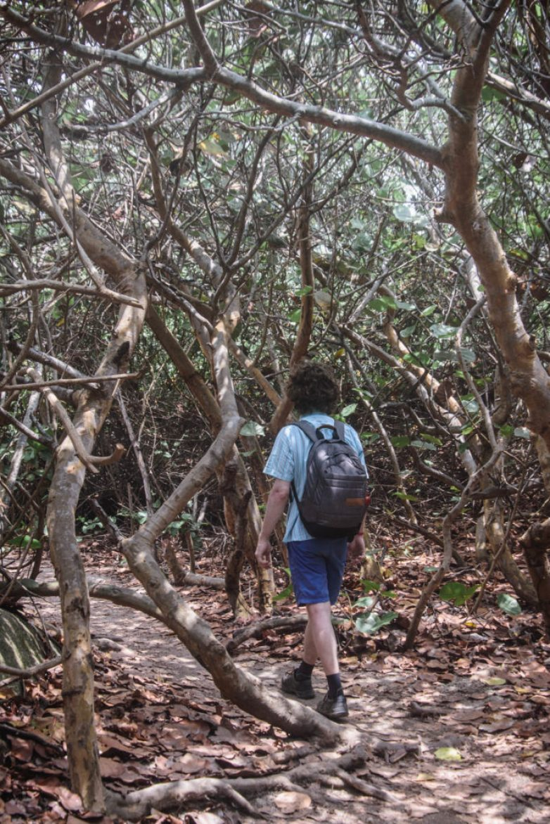 Pokud se chystáte navštívit kolumbijský národní park Tayrona, pak se budou hodit nějaké praktické informace, které najdete v tomto rychlém průvodci.