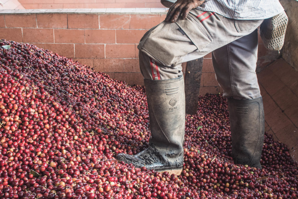 Colombia is one of the biggest coffee exporters in the world so we could not leave without visiting Salento and learning about Colombian coffee production!