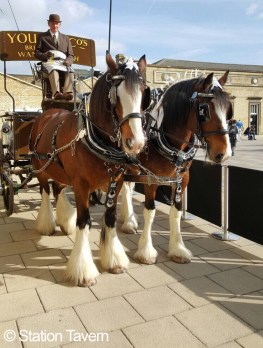 A photograph of two shires horses with dray cart attached behind, with a driver in traditional clothing.