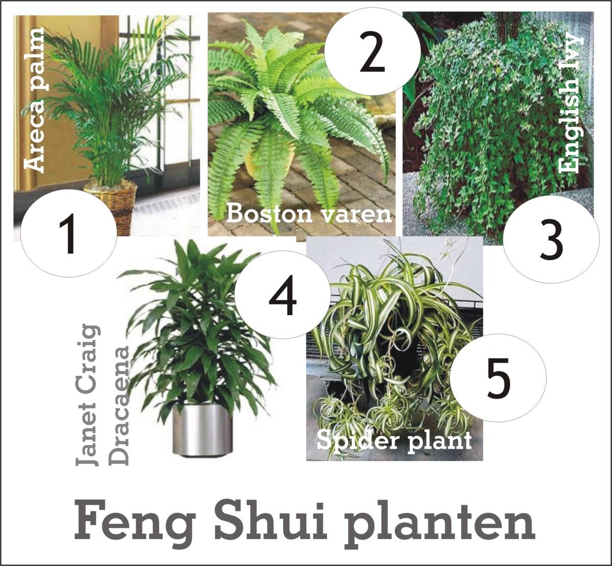 De kracht van planten in je huis  100 Feng Shui