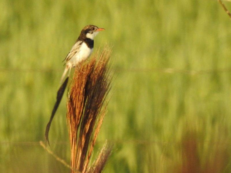 integrante-parque-aves-registra-ave-nao-visualizada-no-brasil