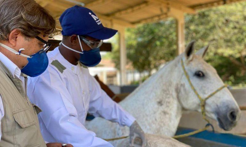 cavalo-soro-tratamento-covid-19