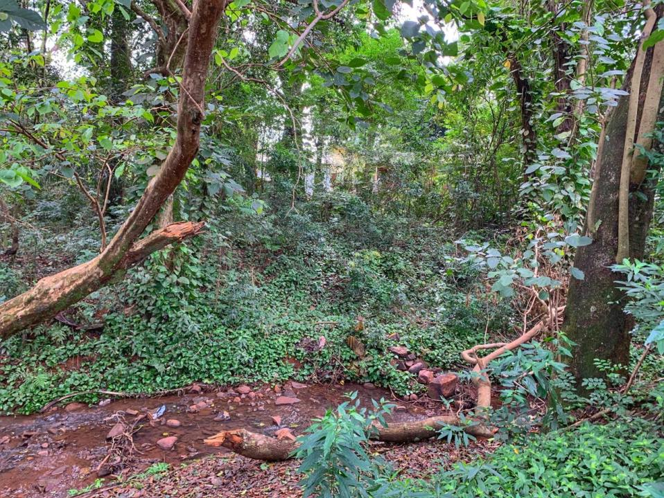 bosque-Javier-Koelbl