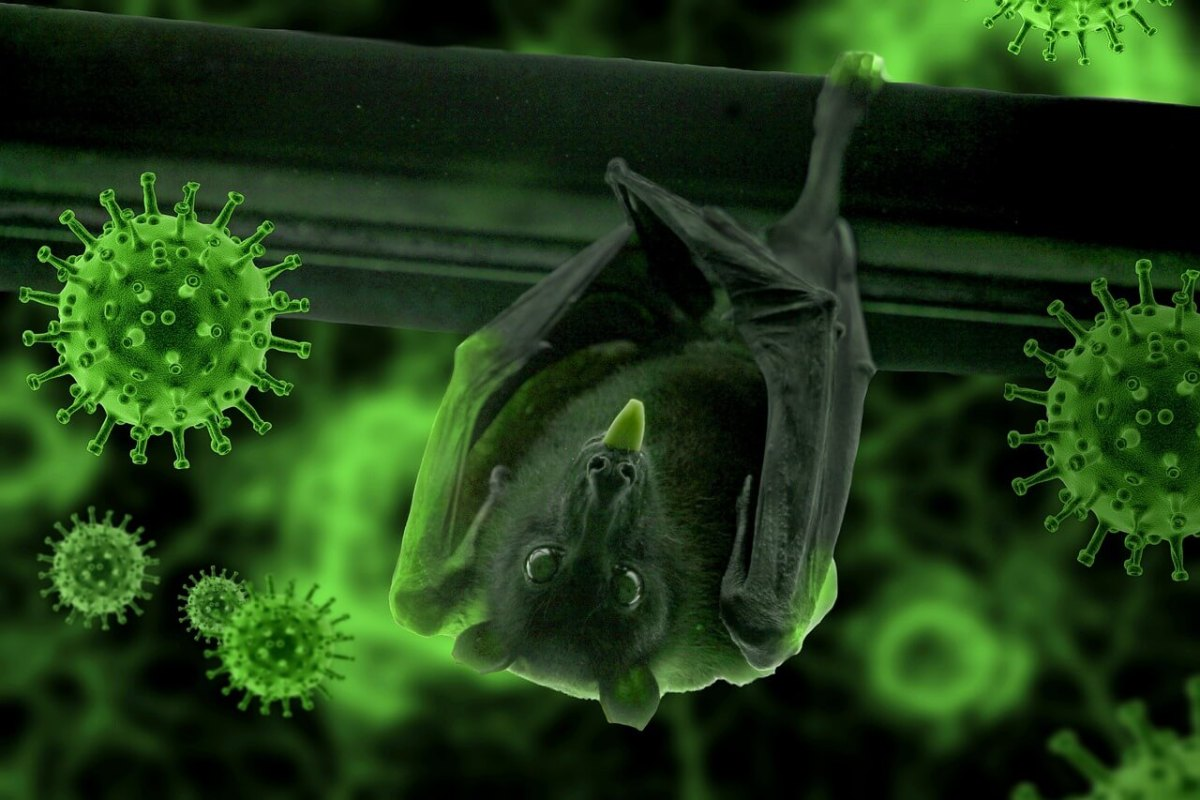 morcego-brasil-virus