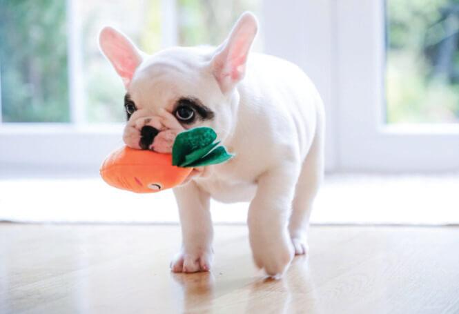 pet-cachorro