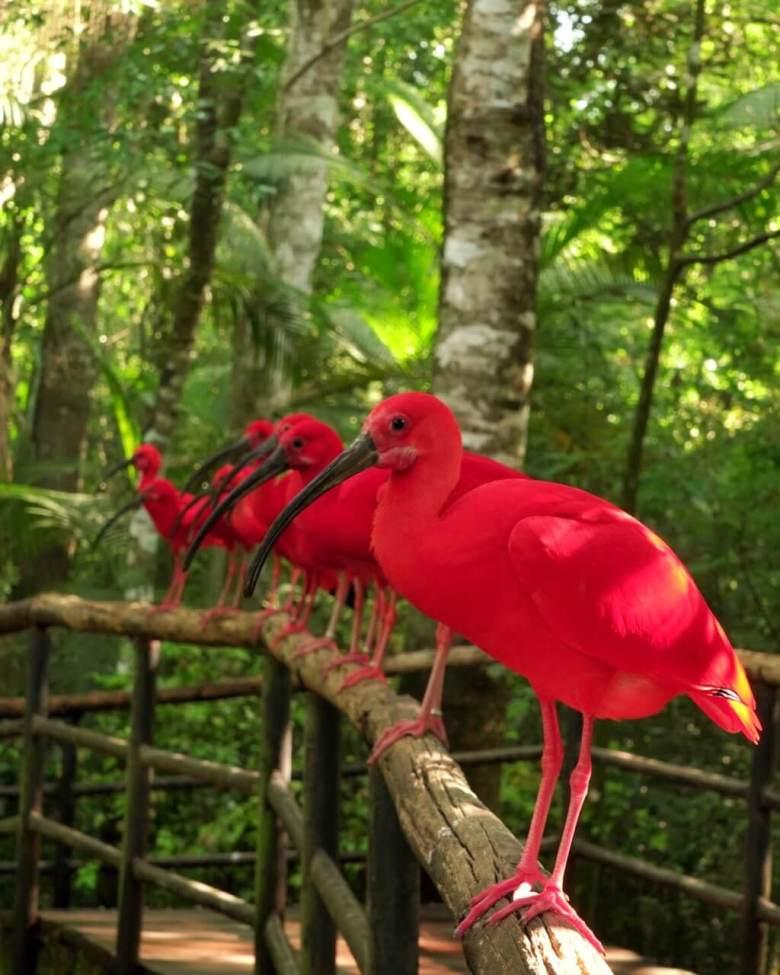 parque-das-aves-foz