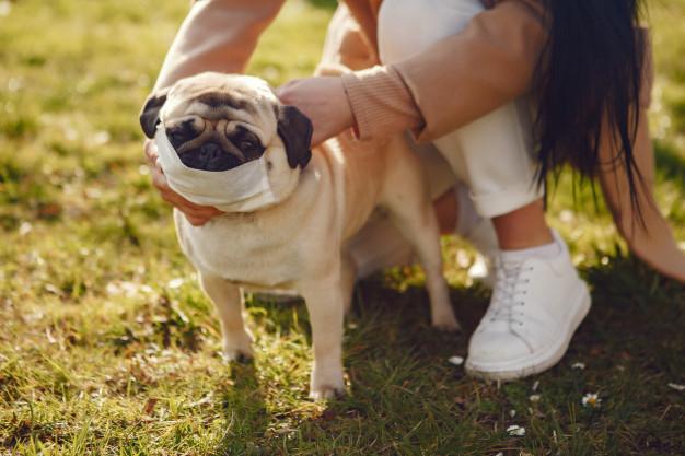Moça com cachorro usando máscara
