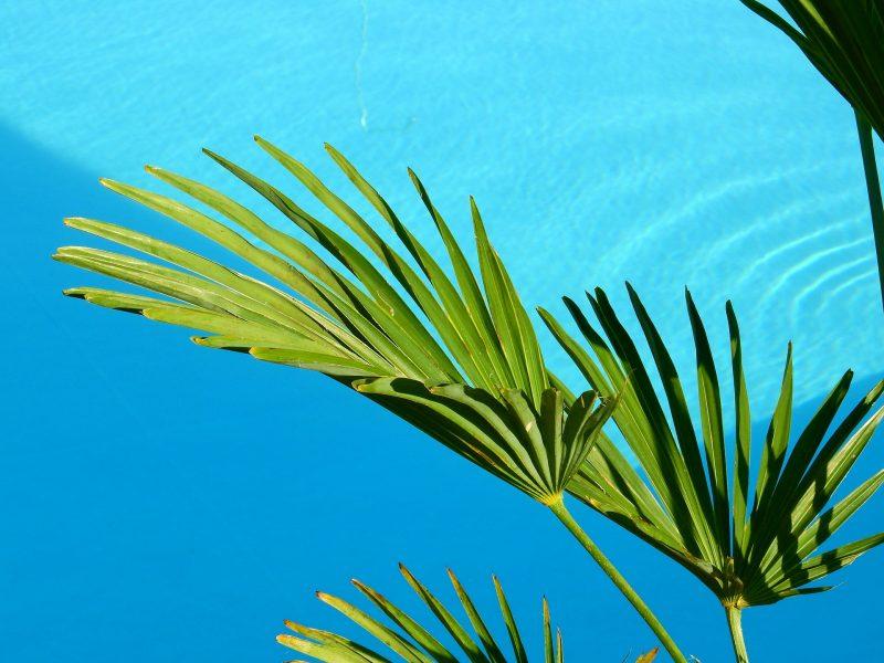 Plantas para a piscina