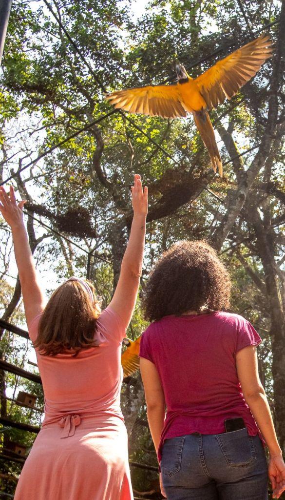Dia da Mata Atlântica com celebrações virtuais no Parque das Aves