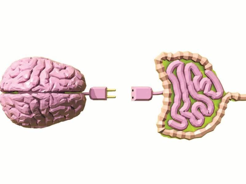 intestino-cerebro-funcionalidades