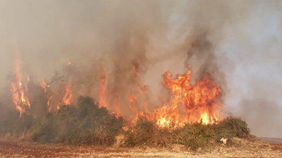 incêndio-rural-floresta-itaipu