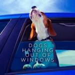 BOOK REVIEW: Dogs Hanging Out Of Windows