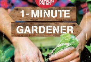 BOOK REVIEW: 1-Minute Gardener by Mat Pember & Fabian Capomolla (The Little Veggie Patch Co.)
