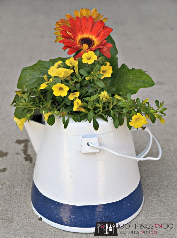 Repurposed coffee pot into a bright summer planter