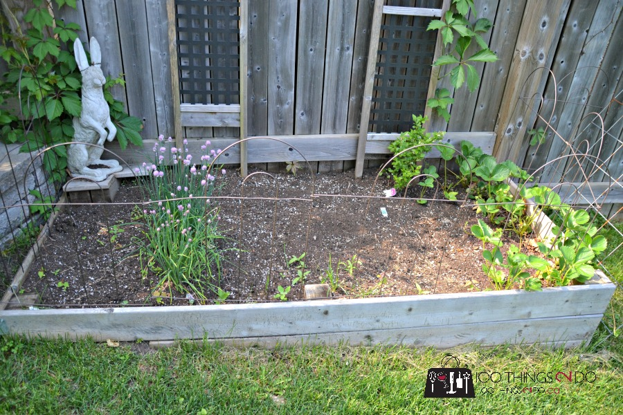 How to keep cats/pests out of your garden