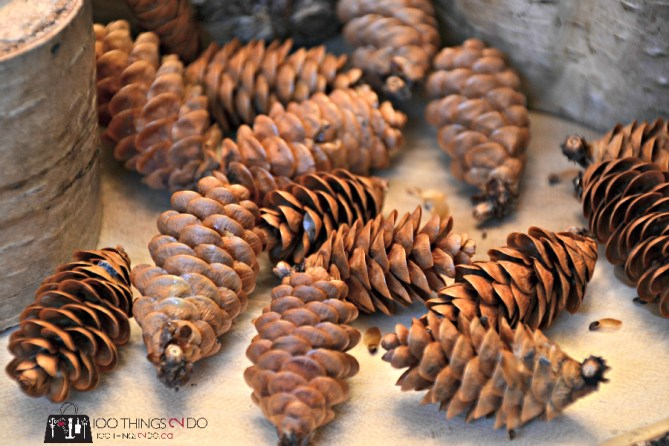 Drying pine cones 2