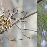 Bird feeder ornaments - crafting with kids