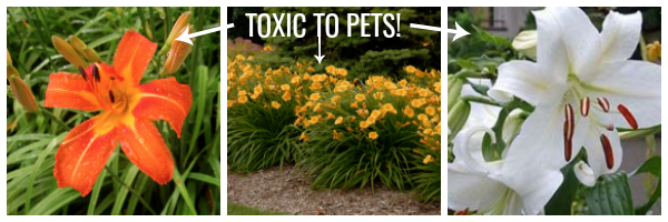 Plants and pets, pet-friendly plants, toxic plants to pets