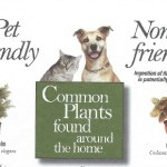 Pet-friendly plants, toxic plants for pets, dangerous indoor plants