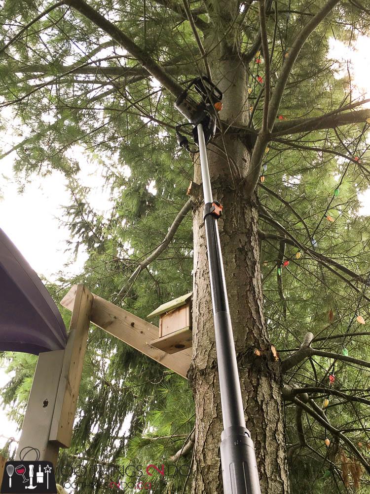 Fall pruning, pruning evergreens, when to prune evergreens, WORX polesaw, when to use a polesaw