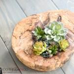 Log succulent planter, succulent planter, log planter, succulent dish, natural decor, branch decor