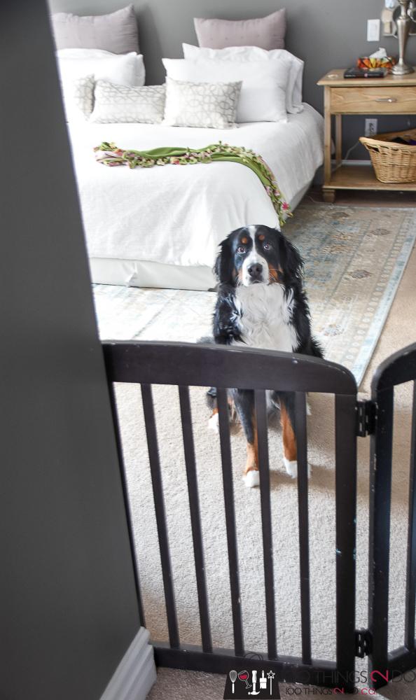 DIY - Free-Standing Pet Gate   100 Things 2 Do