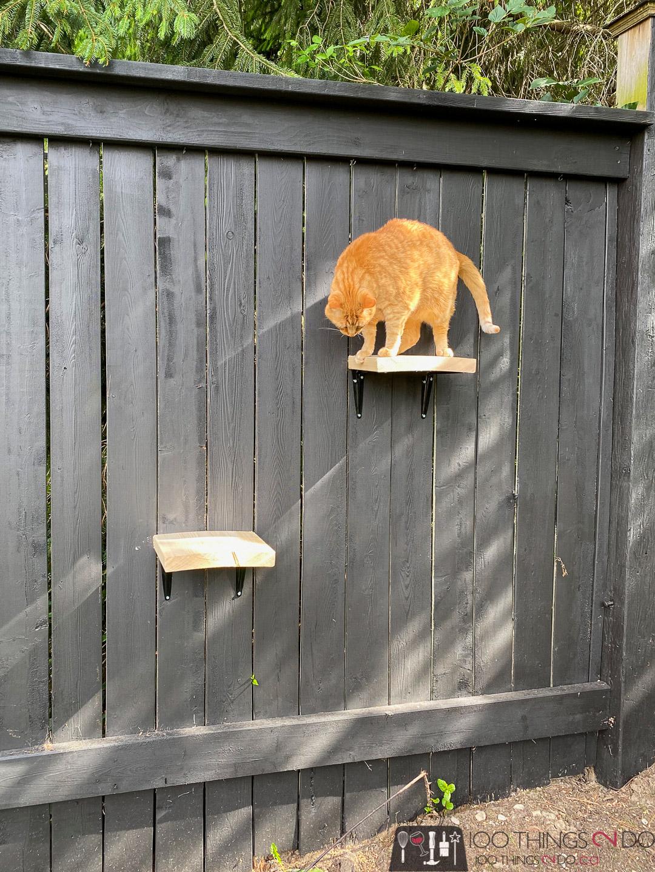 simple cat ladder