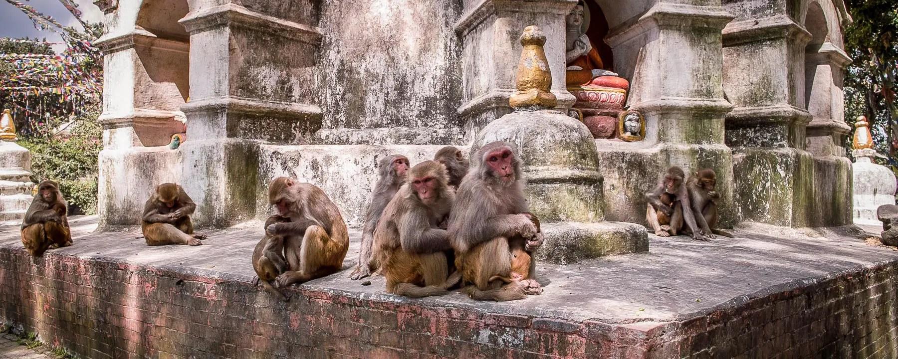 Monkeys Temple KathmanduMonkeys Temple Kathmandu