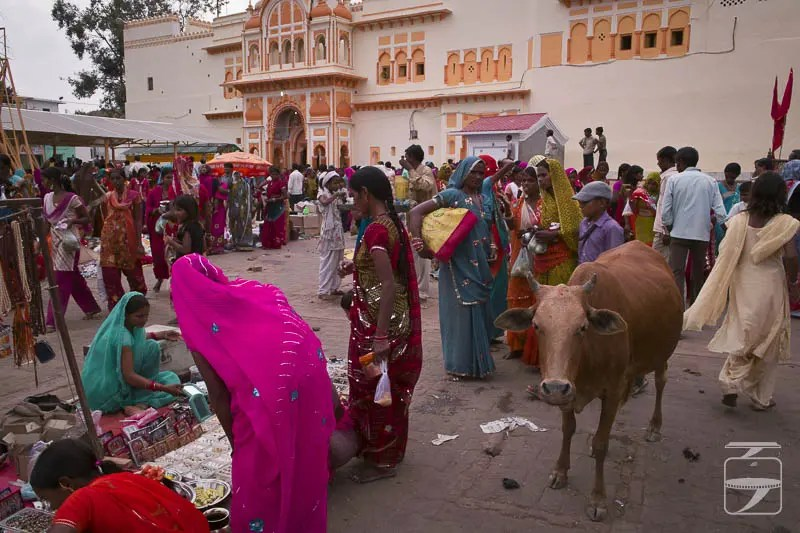 Orcha Market and Cow