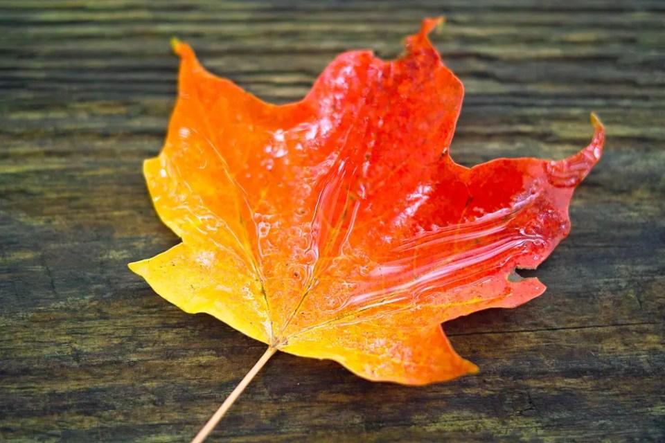 Colourful leaf - fall