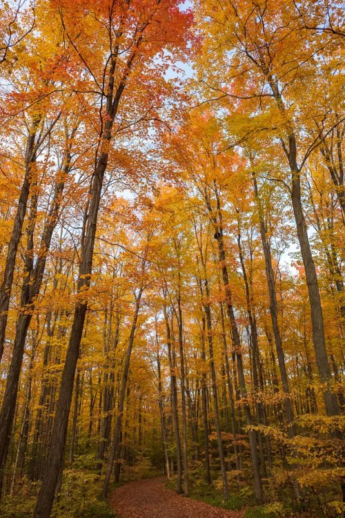Canada fall photos - golden forest
