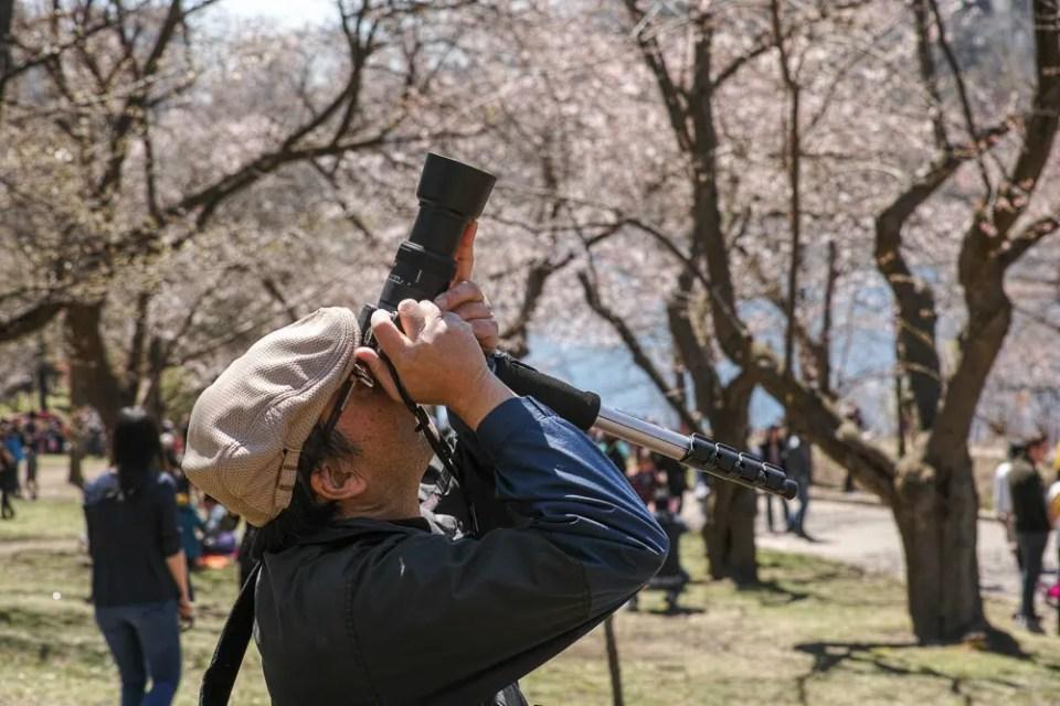 Photographing sakura