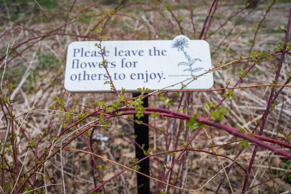 Please leave the flowers for other to enjoy